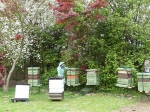 School acquires Bee Hives